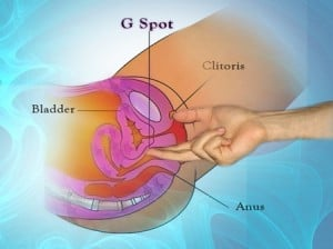 awakened    my G-Spot a mere 6 years ago and was able to slowly    G Spot Diagram