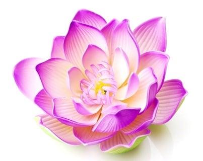 http://members.personallifemedia.com/wp-content/uploads/2014/07/ways-to-feel-more-pleasure-while-lovemaking.jpg