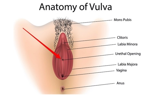 http://members.personallifemedia.com/wp-content/uploads/2018/01/Anatomy-Of-Vulva-320.jpg