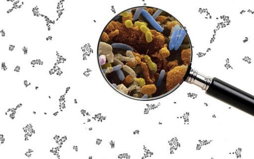 LAST CHANCE for FREE Bottles of P3-OM Probiotics
