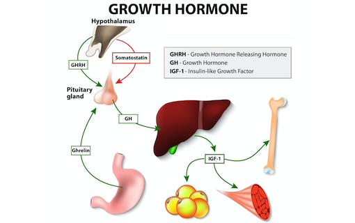 https://members.personallifemedia.com/wp-content/uploads/2020/02/Growth-Hormone-320.png